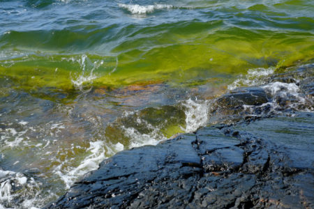 Green algae, waves hitting a rock